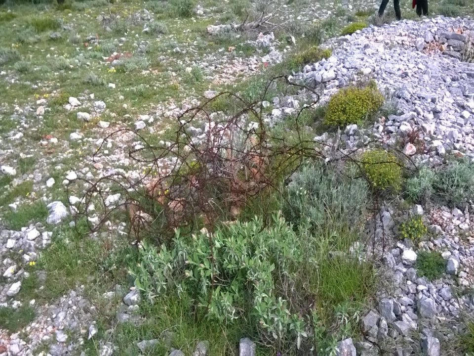 Bodljikava žica odbačena u prirodu